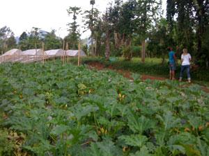 Zucchini-field-sfw